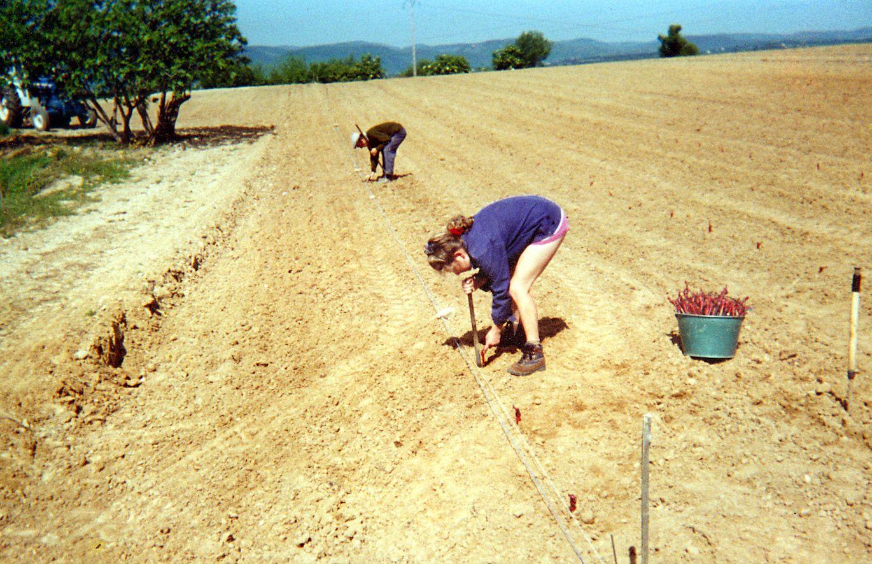 Plantation de 2 hectares de vin de pays : Syrahs - Merlot - Viognier